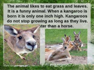 The animal likes to eat grass and leaves. It is a funny animal. When a kangar