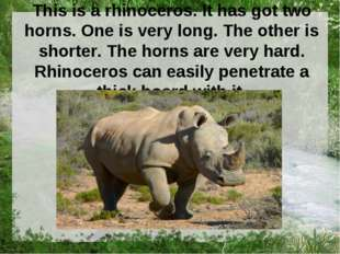 This is a rhinoceros. It has got two horns. One is very long. The other is sh