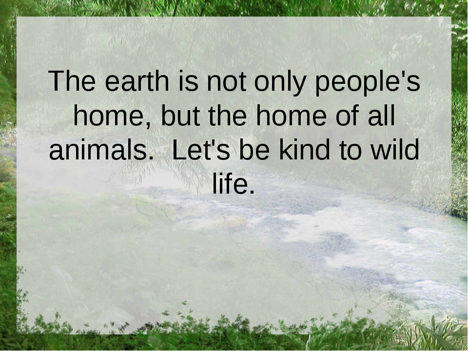 The earth is not only people's home, but the home of all animals. Let's be ki...