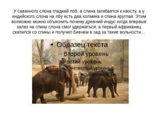 У саванного слона гладкий лоб, а спина загибается к хвосту, а у индийского сл