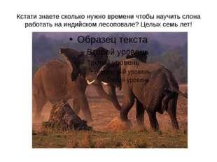 Кстати знаете сколько нужно времени чтобы научить слона работать на индийском