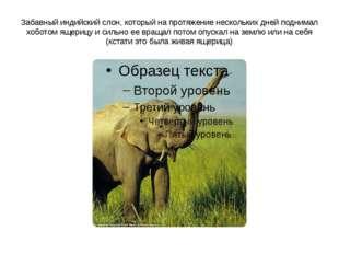 Забавный индийский слон, который на протяжение нескольких дней поднимал хобот
