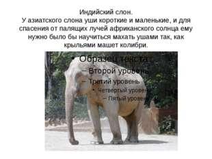 Индийский слон. У азиатского слона уши короткие и маленькие, и для спасения о