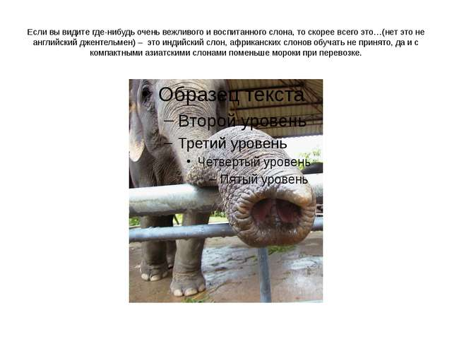Если вы видите где-нибудь очень вежливого и воспитанного слона, то скорее все...