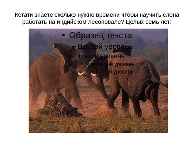 Кстати знаете сколько нужно времени чтобы научить слона работать на индийском...