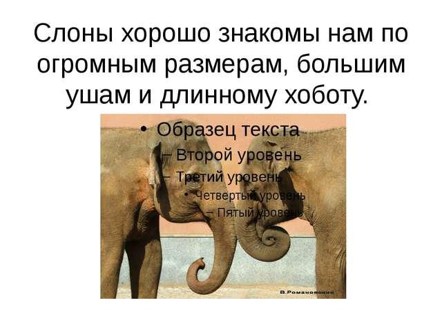 Слоны хорошо знакомы нам по огромным размерам, большим ушам и длинному хоботу.