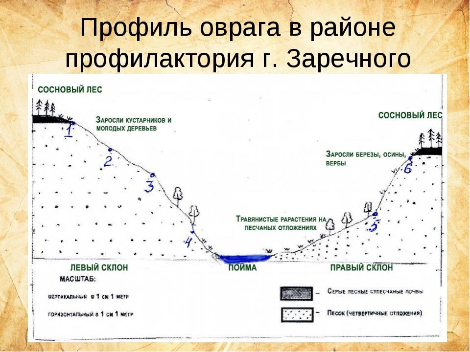 Профиль оврага в районе профилактория г. Заречного
