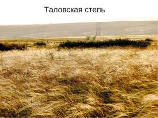 Таловская степь