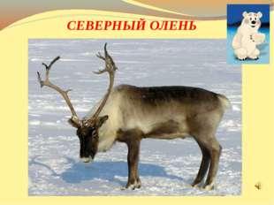 Большие рога, высокие ноги. Он ходит по снегу, совсем без дороги. Помочь чело