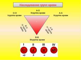 - О-О Iгруппа крови А-А IIгруппа крови В-В IIIгруппа крови В-О III группа кро