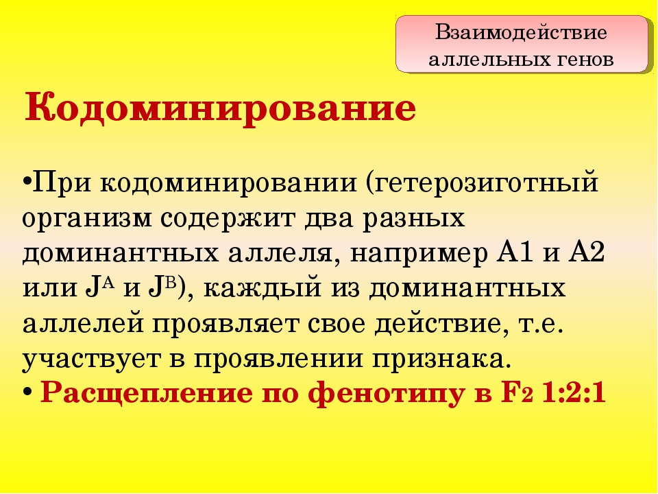 При кодоминировании (гетерозиготный организм содержит два разных доминантных...