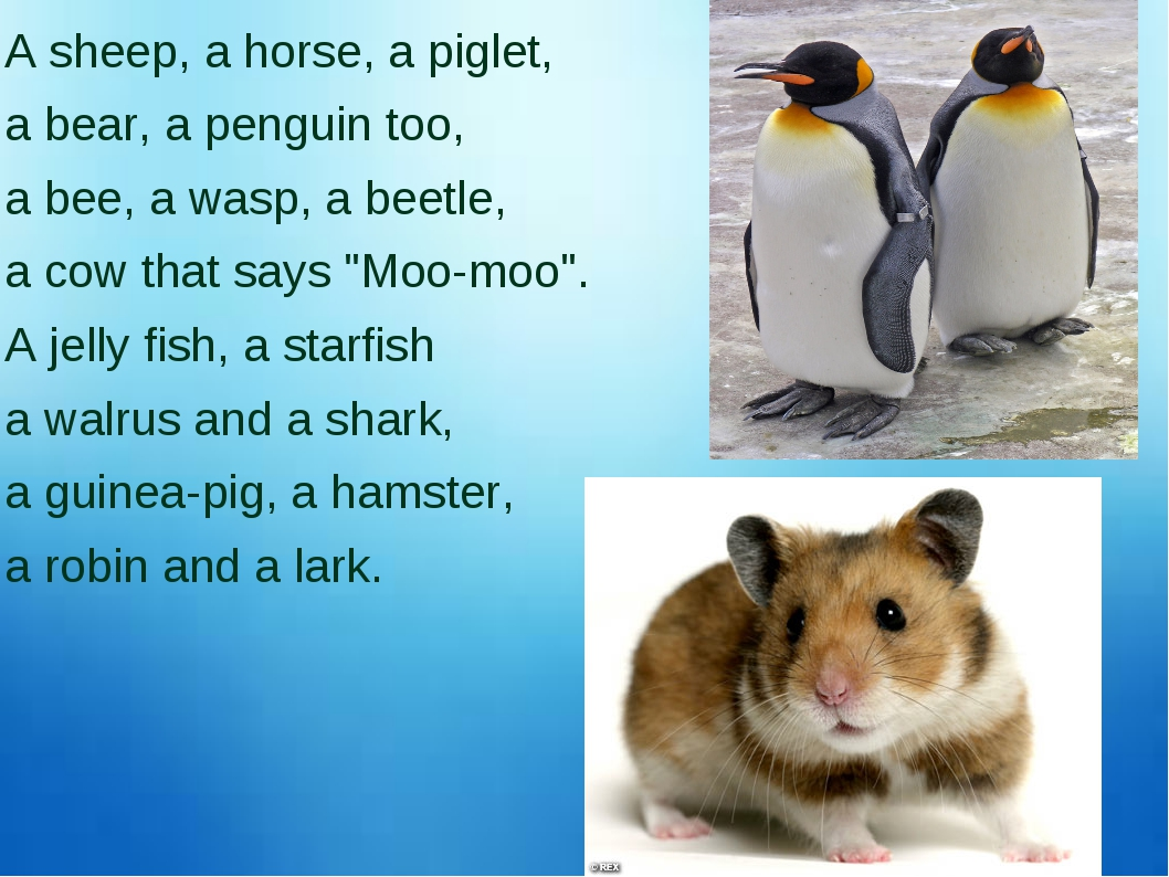 A sheep, a horse, a piglet, a bear, a penguin too, a bee, a wasp, a beetle, a...