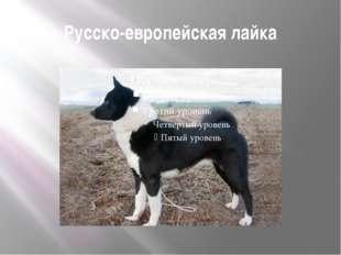 Русско-европейская лайка