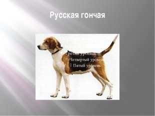 Русская гончая