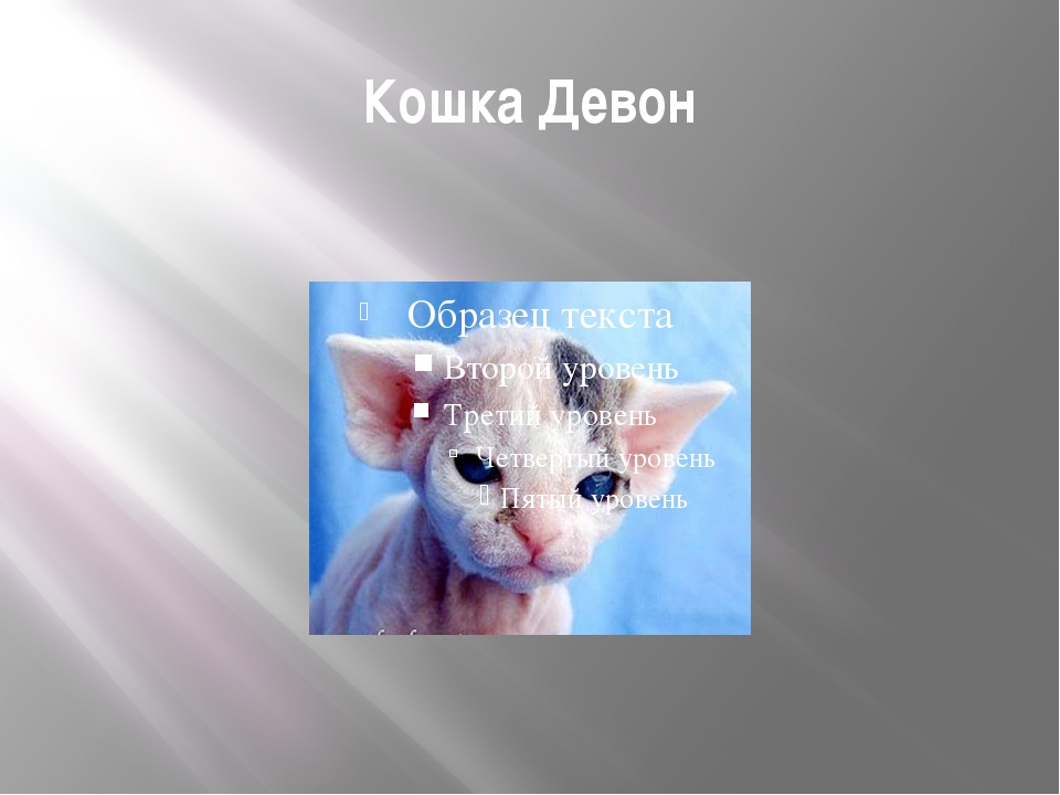 Кошка Девон