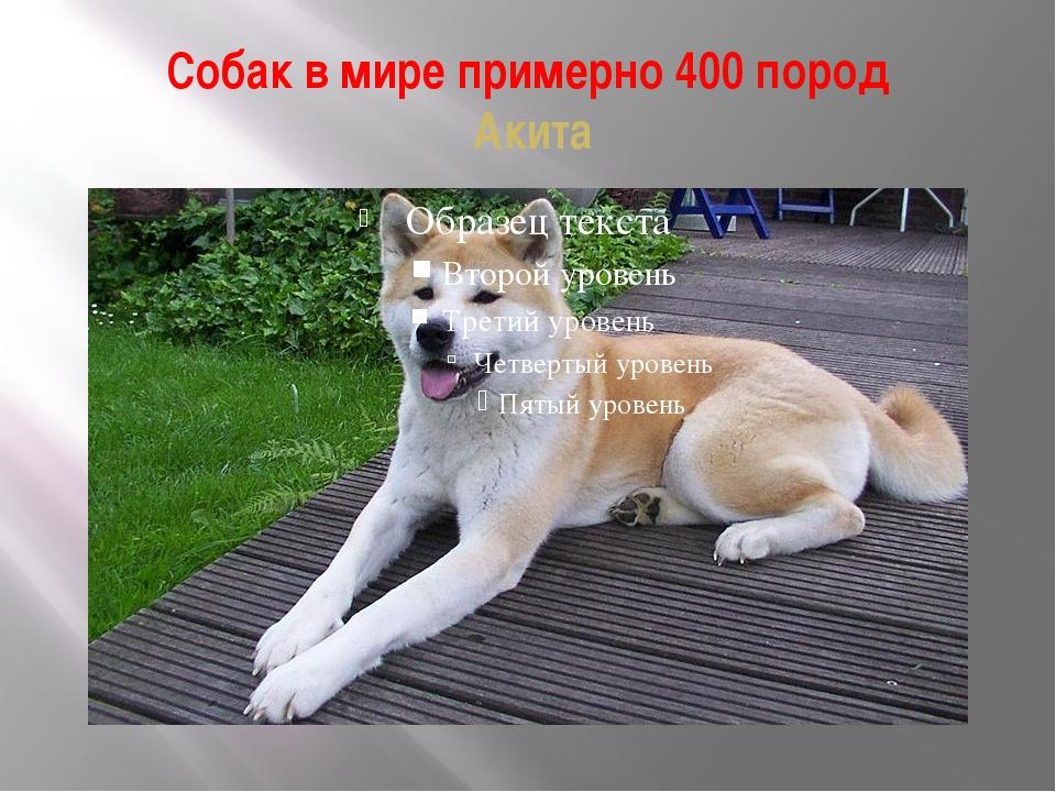 Собак в мире примерно 400 пород Акита