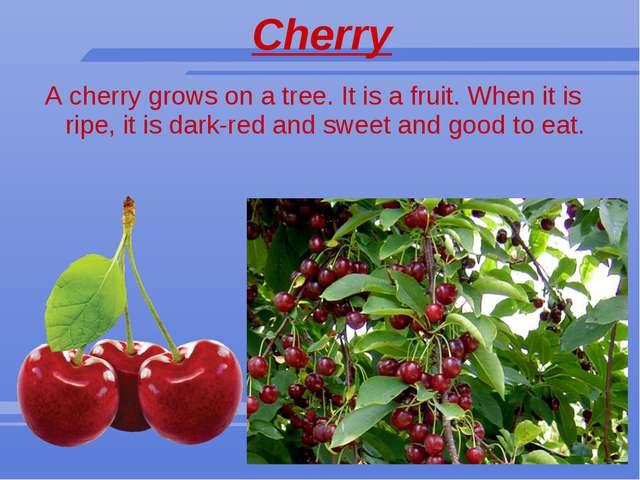 Cherry A cherry grows on a tree. It is a fruit. When it is ripe, it is dark-r...