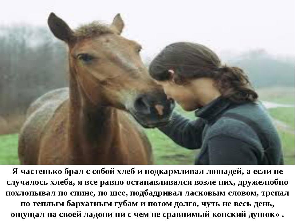 Я частенько брал с собой хлеб и подкармливал лошадей, а если не случалось хл...