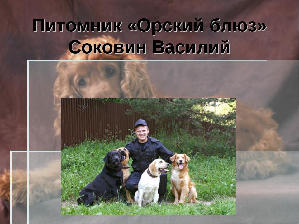 Питомник «Орский блюз» Соковин Василий