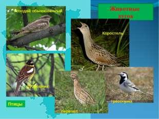 Животные лугов Птицы Коростель Дубровник Козодой обыкновенный трясогузка пере