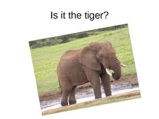 Is it the tiger?