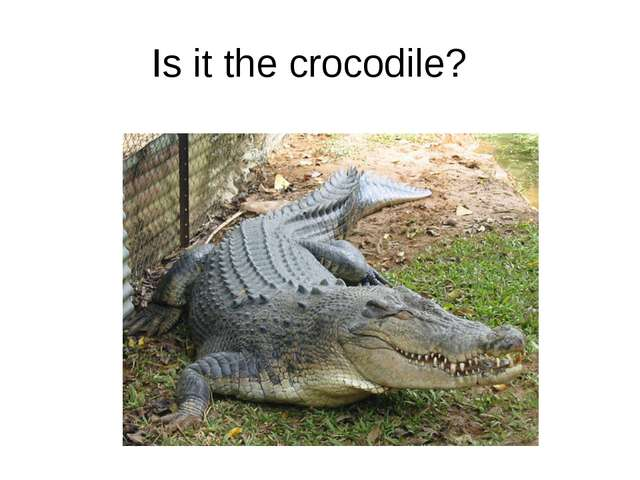 Is it the crocodile?