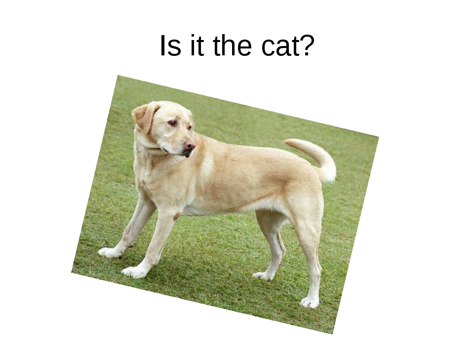 Is it the cat?