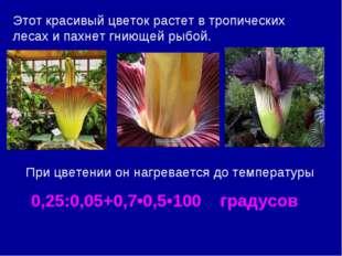 Этот красивый цветок растет в тропических лесах и пахнет гниющей рыбой. При ц