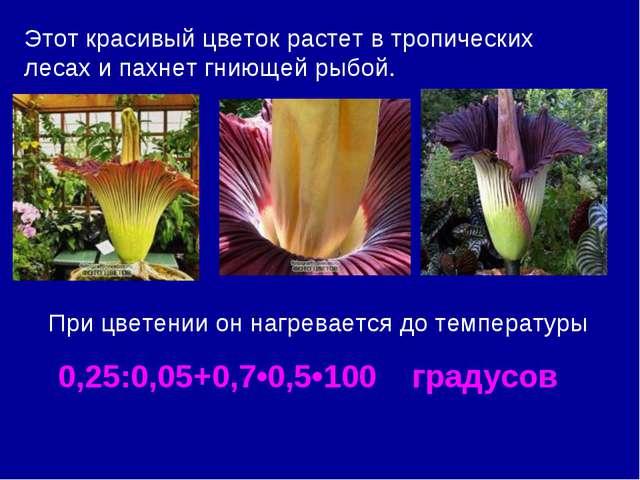 Этот красивый цветок растет в тропических лесах и пахнет гниющей рыбой. При ц...