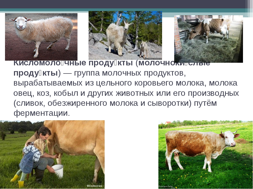 Кисломоло́чные проду́кты (молочноки́слые проду́кты) — группа молочных продукт...