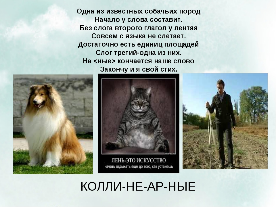 Одна из известных собачьих пород Начало у слова составит. Без слога второго г...