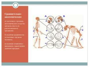 Сравнительно-анатомические а) клеточное строение, анатомическое сходство орга