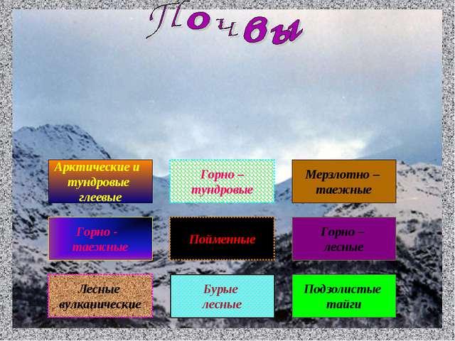 Лесные вулканические Арктические и тундровые глеевые Горно - таежные Подзолис...