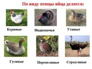 По виду птицы яйца делятся: Куриные Утиные Страусиные Индюшачьи Перепелиные Г