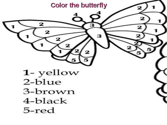 Color the butterfly