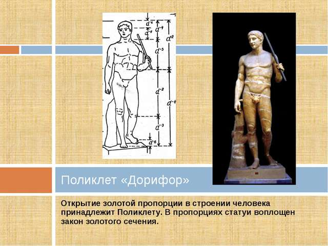 Открытие золотой пропорции в строении человека принадлежит Поликлету. В пропо...