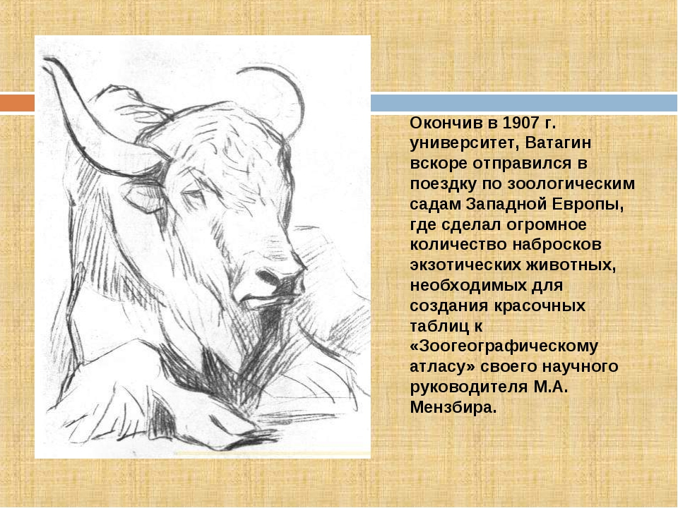 Окончив в 1907 г. университет, Ватагин вскоре отправился в поездку по зоологи...