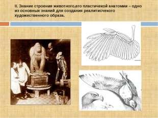 II. Знание строения животного,его плаcтичекой анатомии – одно из оcновных зна