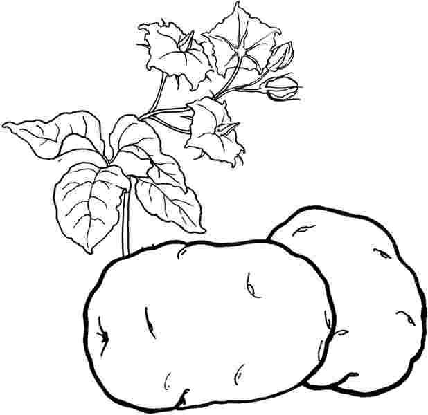 рисунки овощей для детей - Всемирная схемотехника