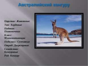 Царство: Животные Тип: Хордовые Подтип: Позвоночные Класс: Млекопитающие Под