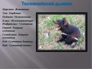 Царство: Животные Тип: Хордовые Подтип: Позвоночные Класс: Млекопитающие Инфр