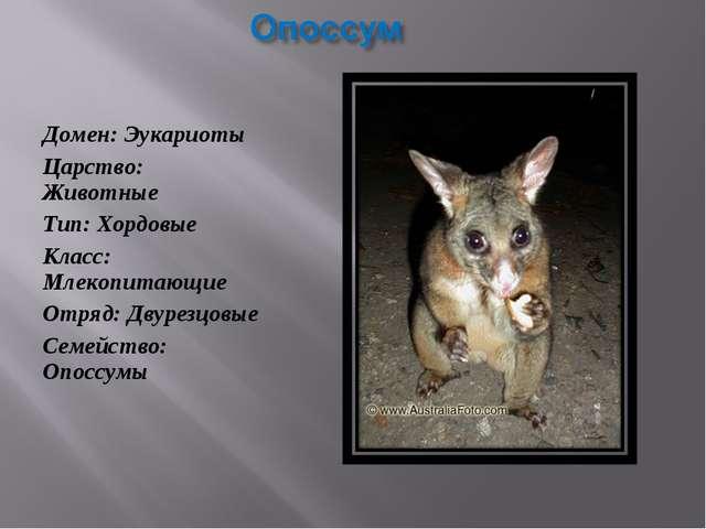 Домен: Эукариоты Царство: Животные Тип: Хордовые Класс: Млекопитающие Отряд:...