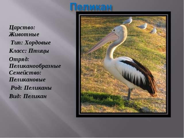 Царство: Животные Тип: Хордовые Класс: Птицы Отряд: Пеликанообразные Семейств...