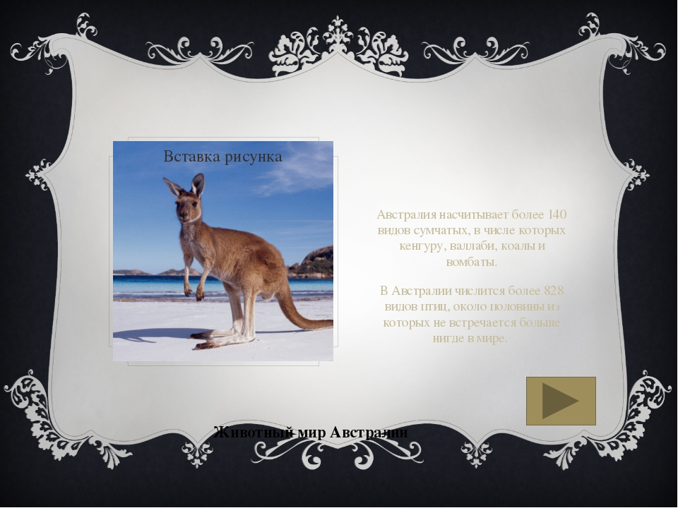 Животный мир Австралии Австралия насчитывает более 140 видов сумчатых, в чис...