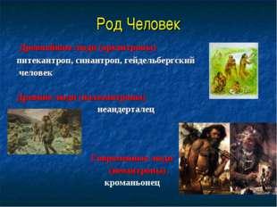 Род Человек Древнейшие люди (архантропы) питекантроп, синантроп, гейдельбергс