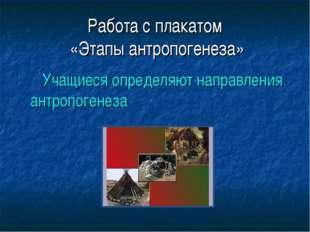 Работа с плакатом «Этапы антропогенеза» Учащиеся определяют направления антро