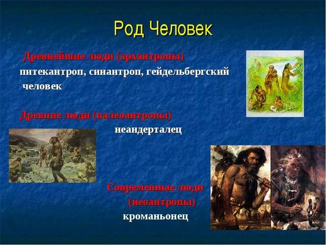 Род Человек Древнейшие люди (архантропы) питекантроп, синантроп, гейдельбергс...