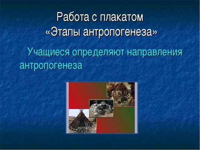 Работа с плакатом «Этапы антропогенеза» Учащиеся определяют направления антро...
