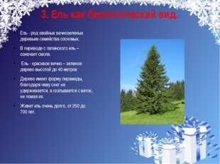 3. Ель как биологический вид. Ель - род хвойных вечнозеленых деревьев семейст