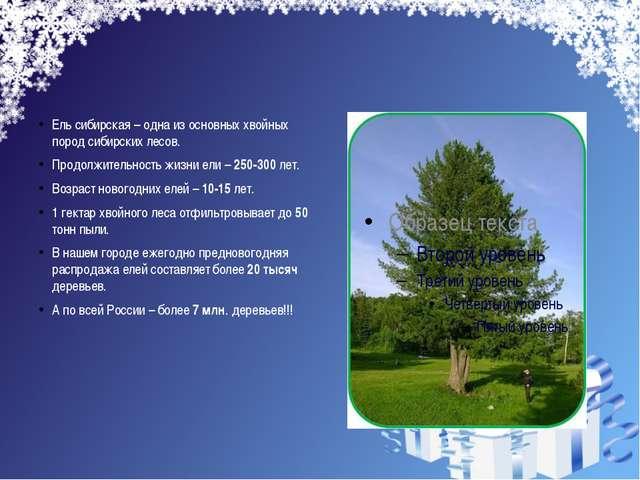 Ель сибирская – одна из основных хвойных пород сибирских лесов. Продолжитель...